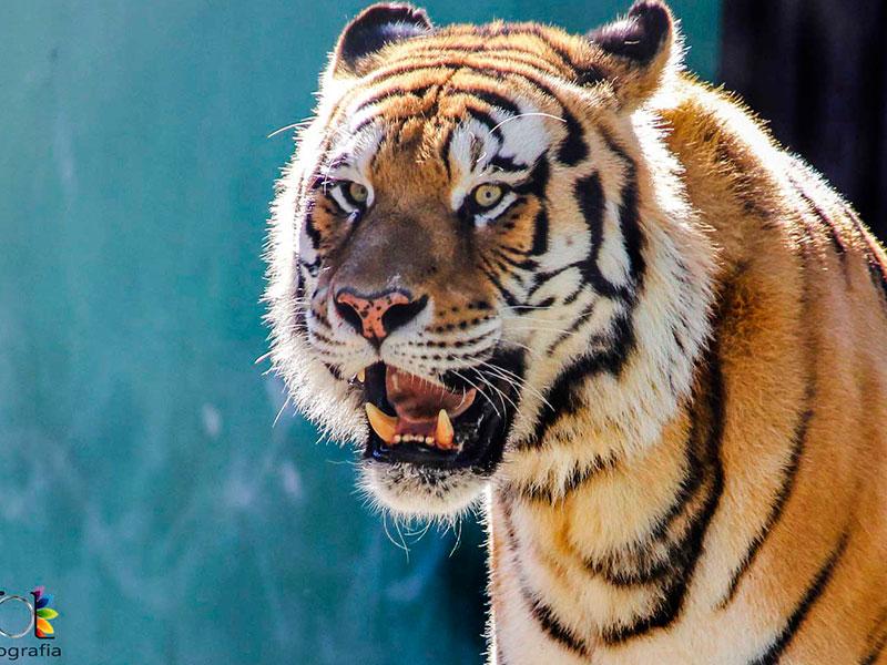 Zoo Santur