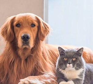 Hospedagem com animais de estimação